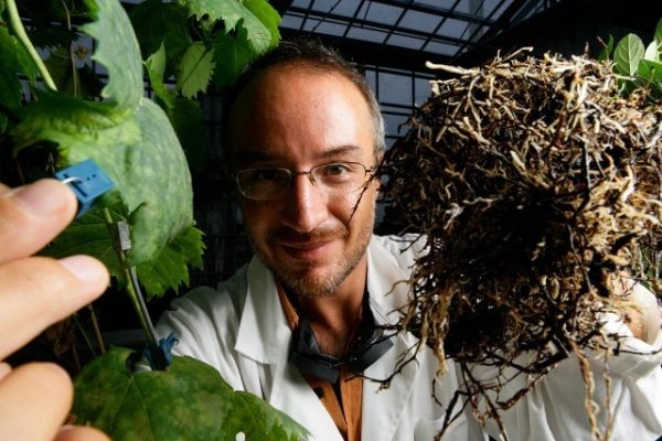 Stefano-Mancuso-plant-neurologist